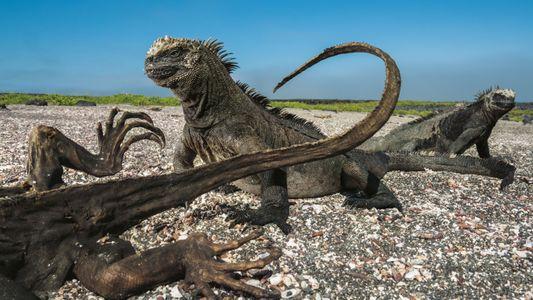 Leben und Sterben auf den Galápagosinseln