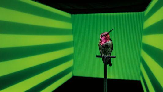 Galerie: Kolibris im Fokus