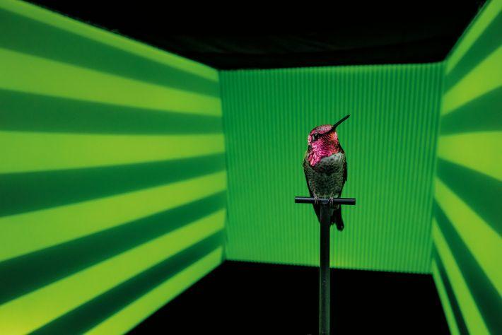 Kolibri im Musterkanal