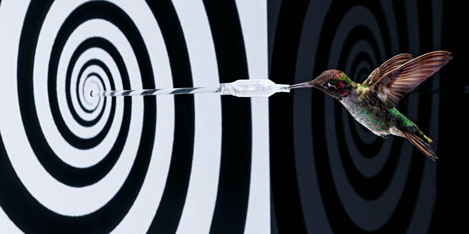 Kolibris – die fliegenden Juwelen
