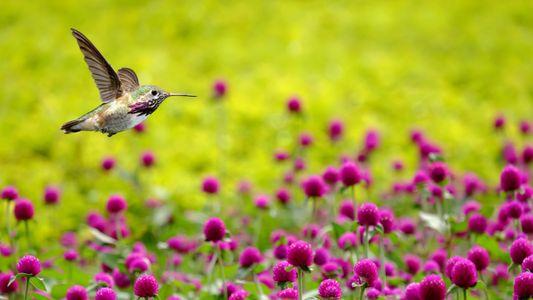 """""""Kolibris sind überhaupt nicht scheu"""""""