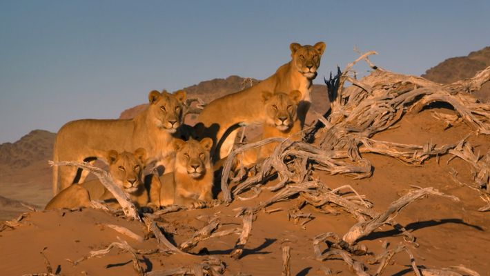 Internationaler Tag Des Löwen