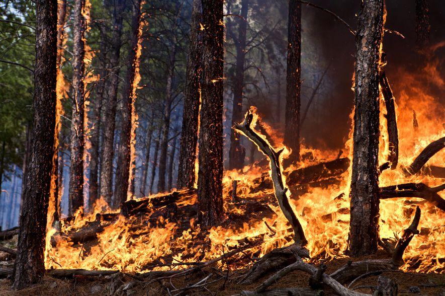 Größtes Waldgebiet der Erde zunehmend von Bränden durch Blitzschläge bedroht