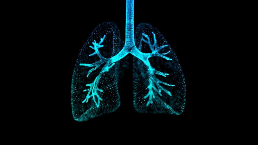 Wissen kompakt: Die Lunge