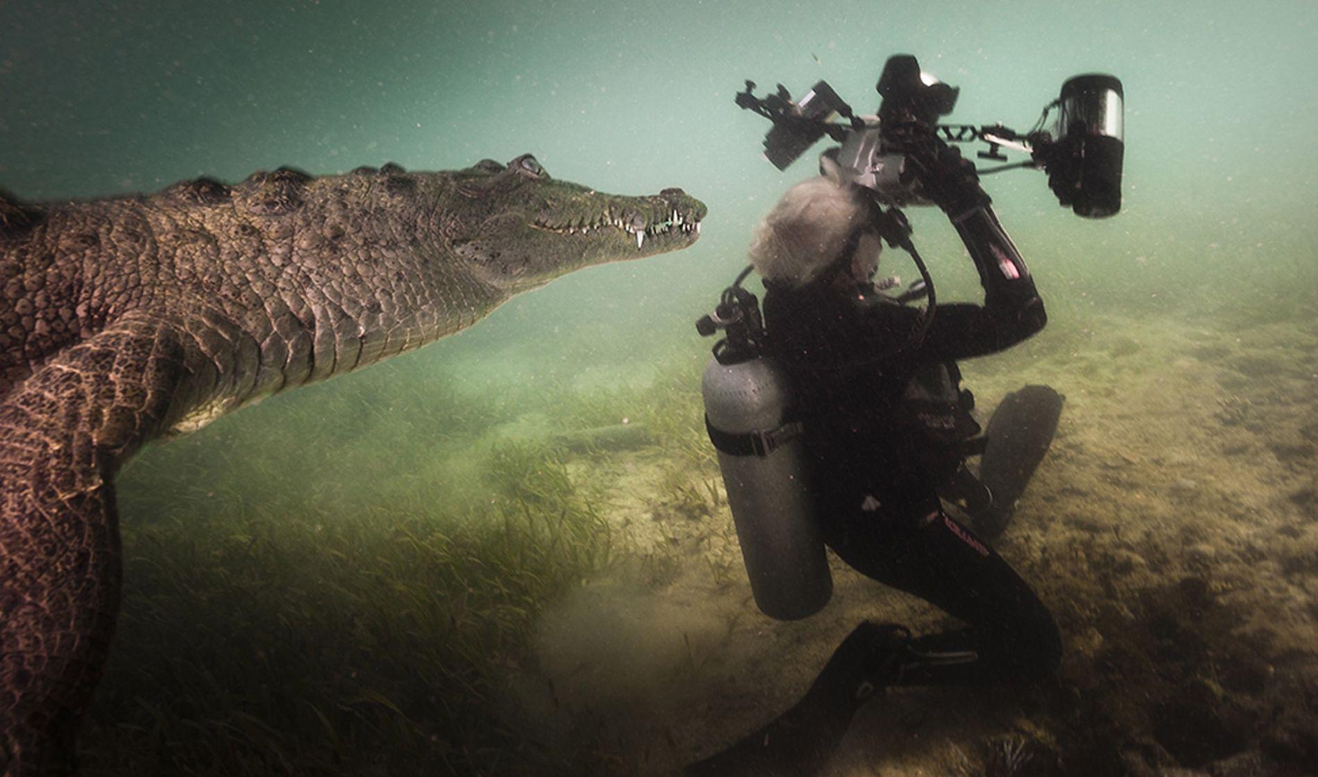 Die Fotografin Jennifer Hayes bekommt Besuch von einem neugierigen Krokodil, als sie gerade Fotos in den ...