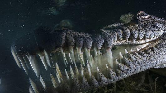 Was macht man, wenn man plötzlich ein Krokodil vor sich hat?