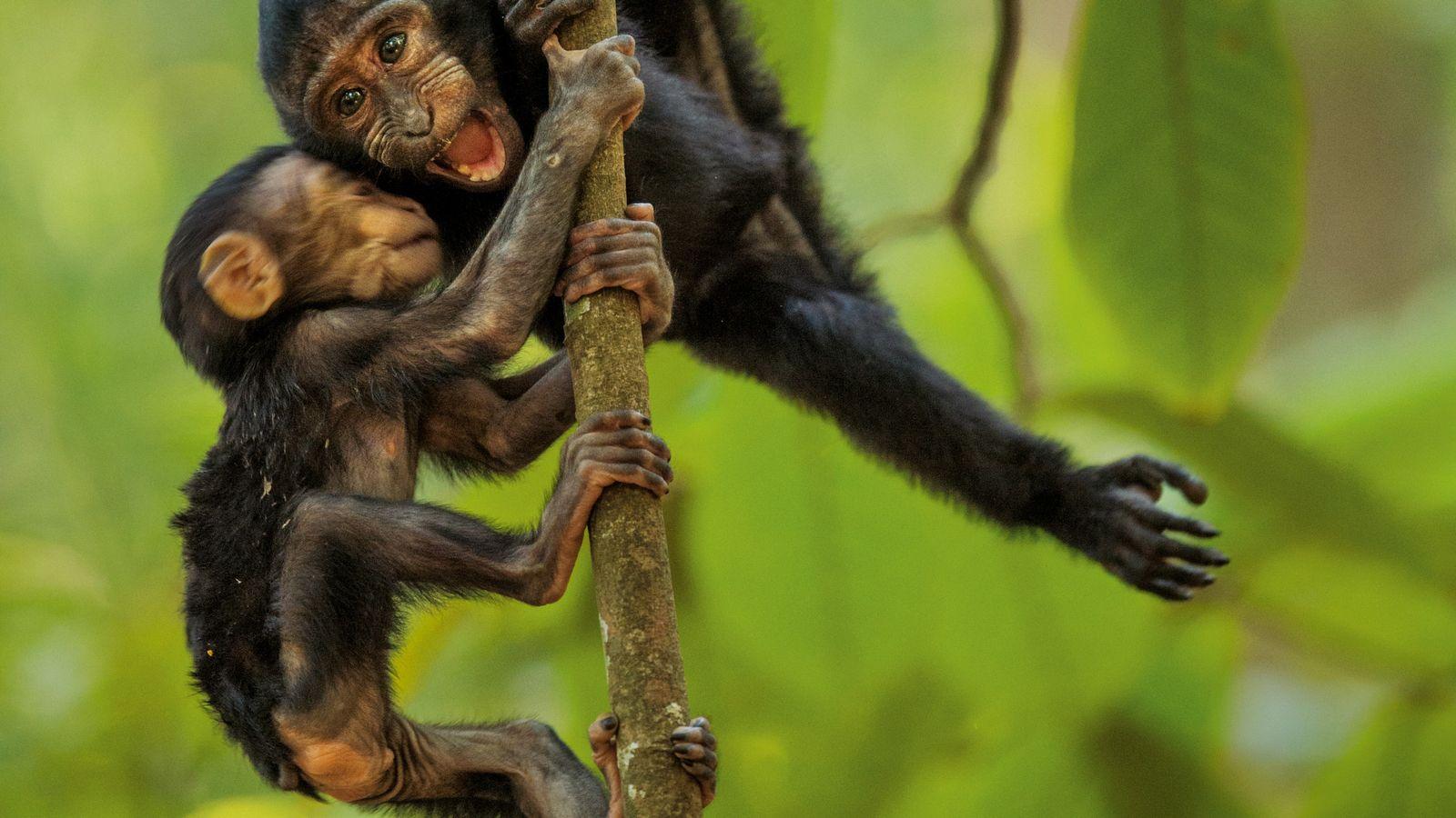 Kleine Makaken