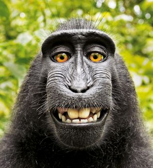 Selfie eines Makaken