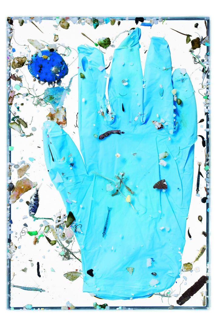 Mikroplastik schädigt Fischlarven