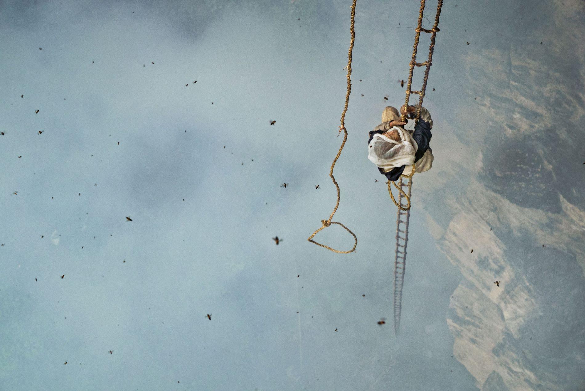 Kliffhänger: Mauli Dhan klettert eine dreißig Meter lange Strickleiter hinauf, um seine Beute zu erreichen – ...
