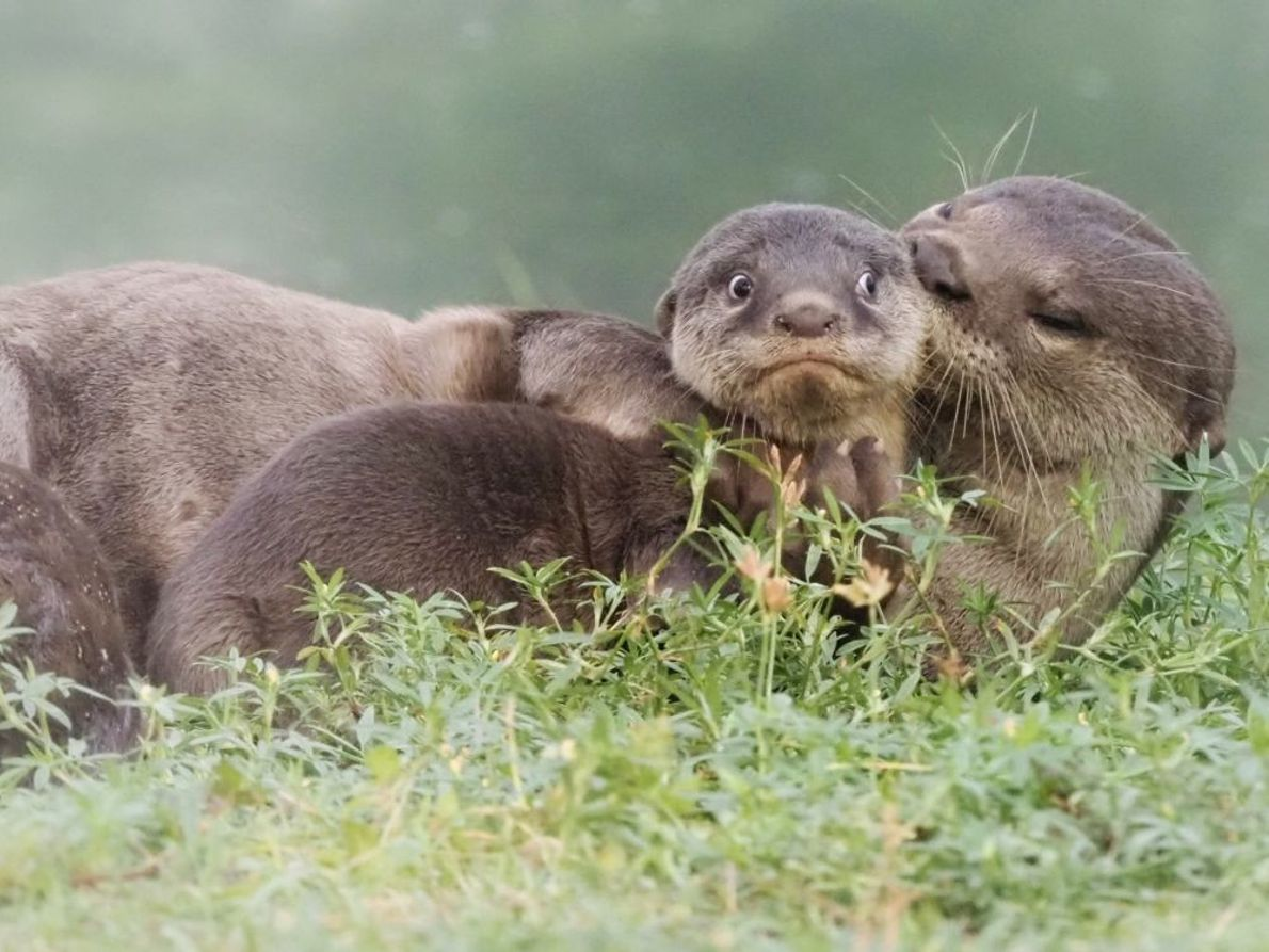 """It's the Last Day of School Holidays"" 