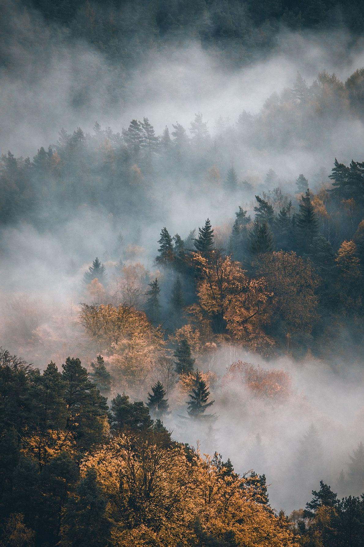 Nebel über dem Wald in der Sächsischen Schweiz