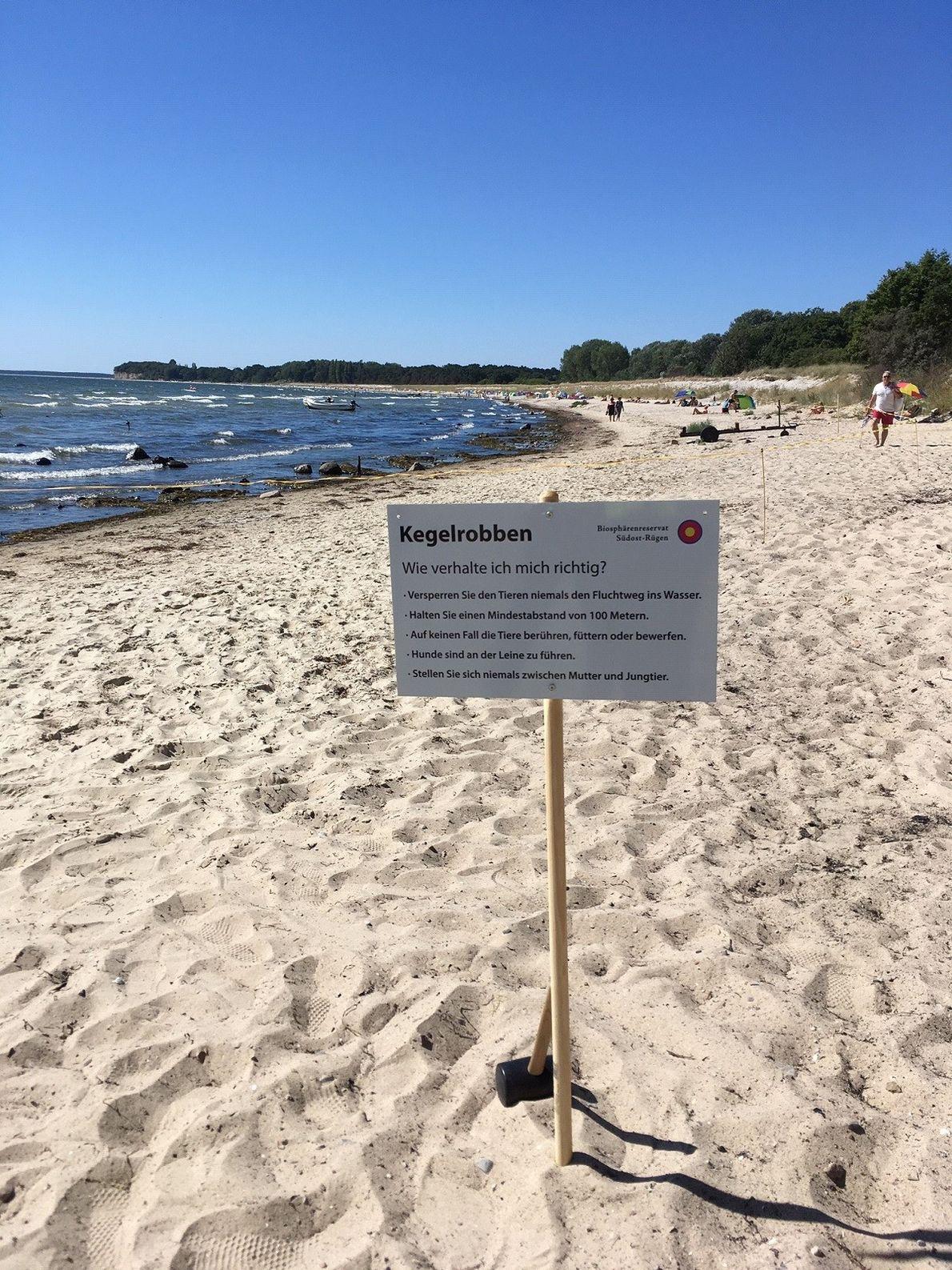 Mit Infoschildern und temporären Absperrungen sollen ruhende Robben an belebten Badestränden geschützt werden.