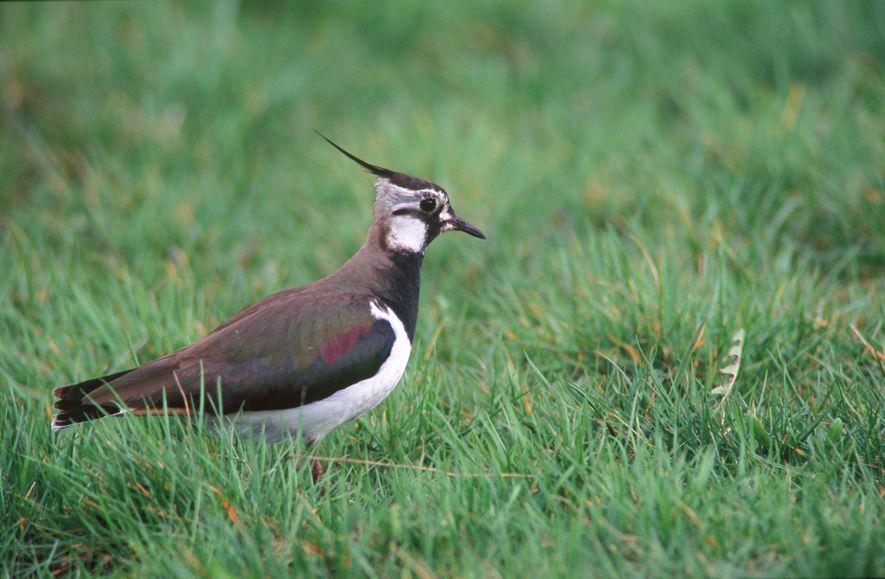 Vogelsterben: Wenn der Frühling verstummt