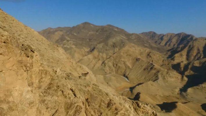 Seltene Riesenwildschafe rennen mühelos steile Berghänge hinauf