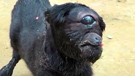"""""""Zyklopen""""-Ziege in Indien geboren"""