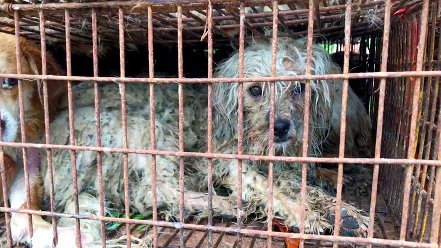 Trotz erwartetem Verkaufsverbot gibt es auf chinesischem Festival weiter Hundefleisch.