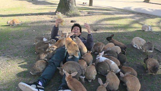 """Die japanische """"Kanincheninsel"""""""