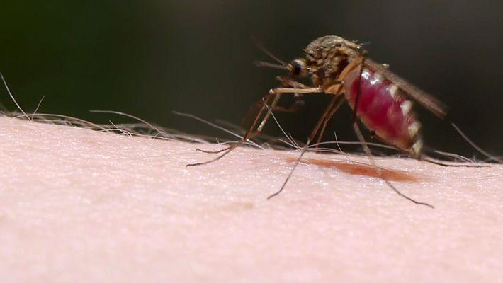 Mücken verhalten sich unauffällig, um an Blut zu kommen