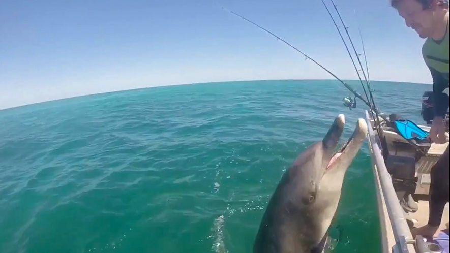 Wilder Delfin bettelt Menschen an