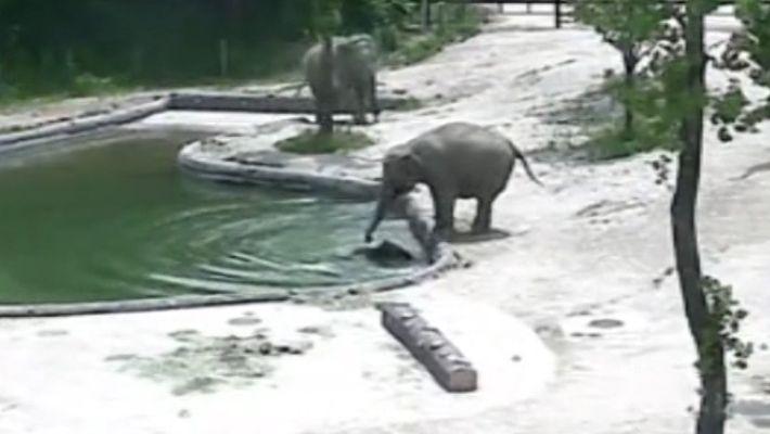 NW_DLY_ds1702001_226_elephants_rescue_drowning_calf_korea--DE