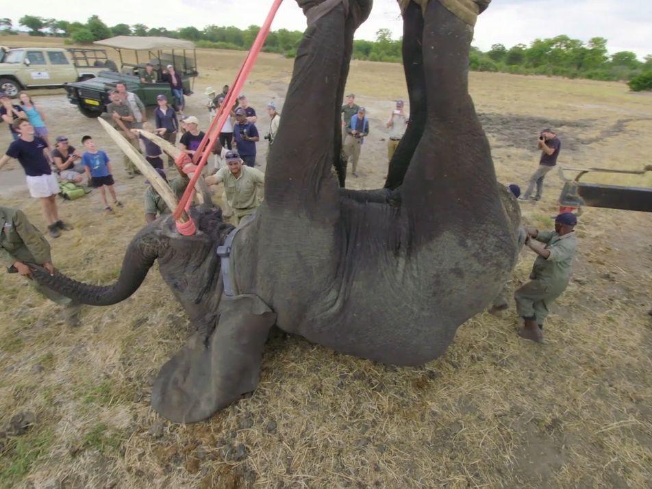 Ein Umzug mit 500 Elefanten
