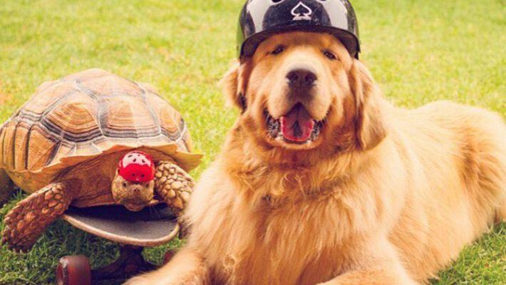 Schildkröte und Hund werden beste Freunde