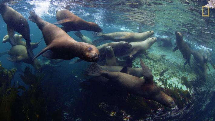 Drei neue Meeresschutzgebiete bewahren Artenvielfalt