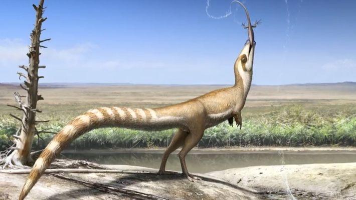 Dinosaurier sah womöglich wie Waschbär aus