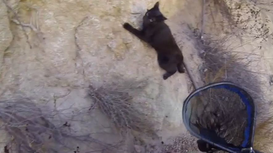 Katzenrettung von Klippe