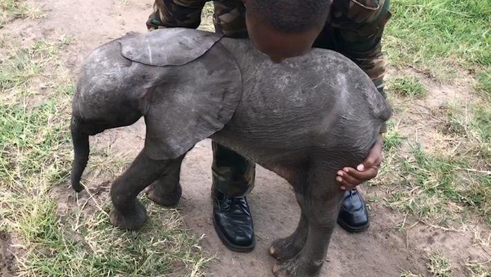 Elefantenkalb im Hubschrauber