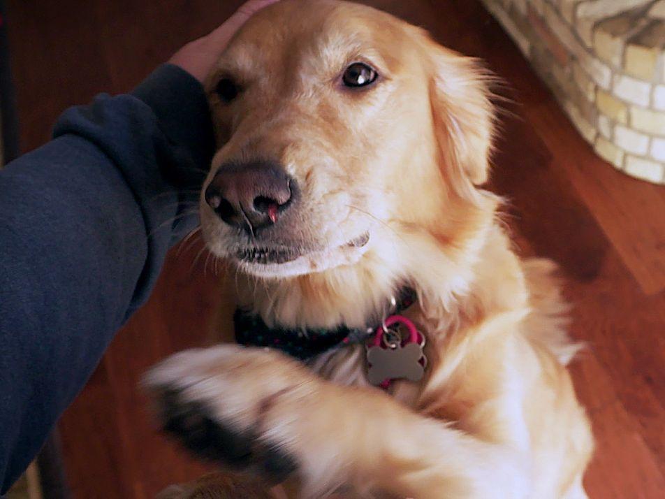 Verbringen Hunde lieber Zeit mit Fremden oder mit Freunden?
