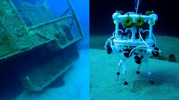 """Dieser """"Robo-Hund"""" könnte der Meeresforscher der Zukunft werden"""