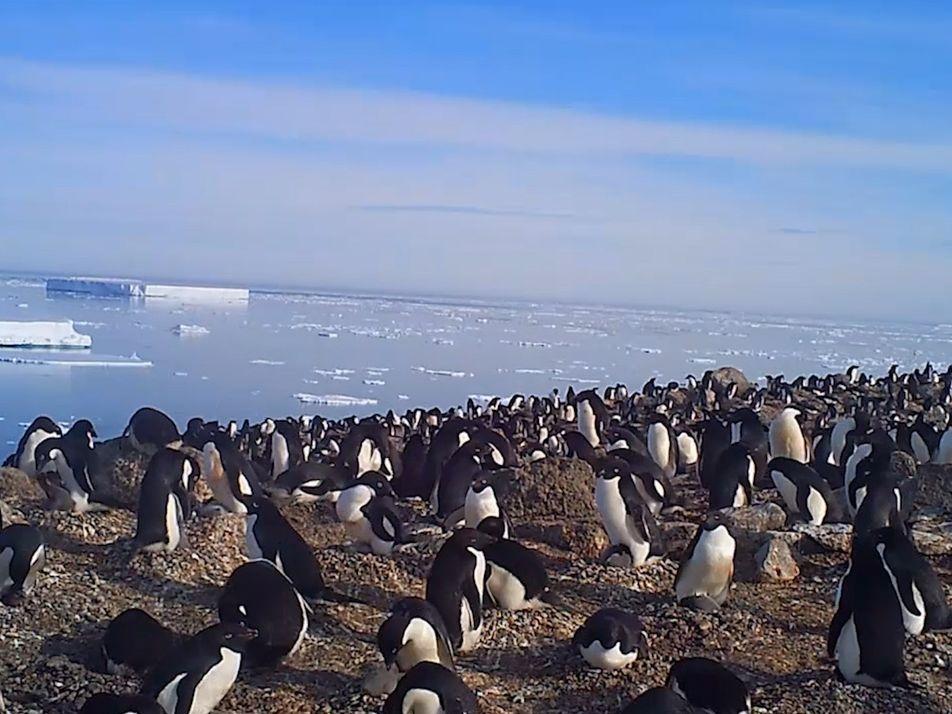 Ein kleiner Einblick in eine versteckte Kolonie von 1,5 Millionen antarktischen Pinguinen