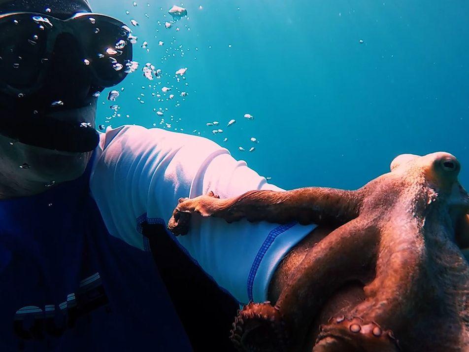 Oktopus reist per Anhalter auf Taucher mit