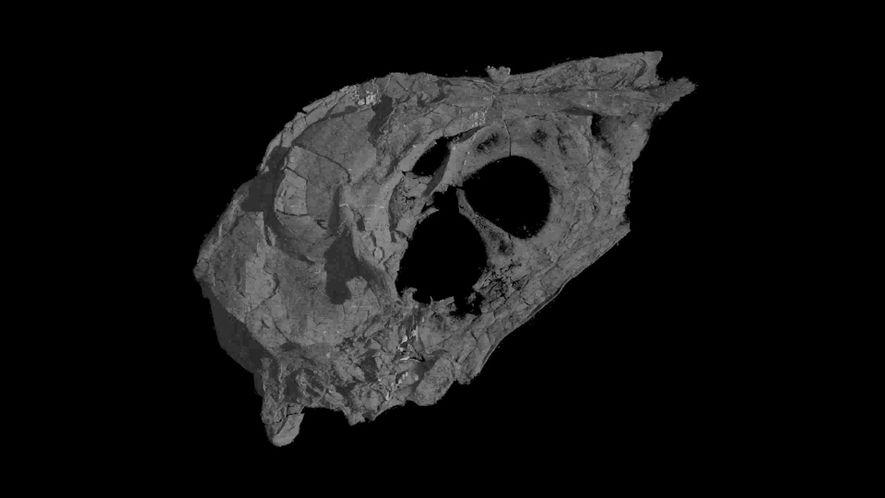 Vogelschädel aus Dinosaurierzeit überraschend gut erhalten