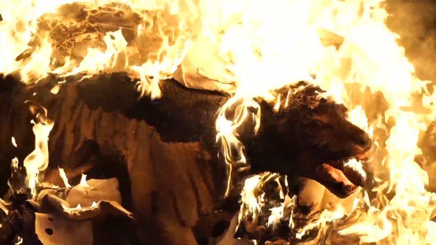 Präparierter Tiger und andere Schmuggelware verbrannt