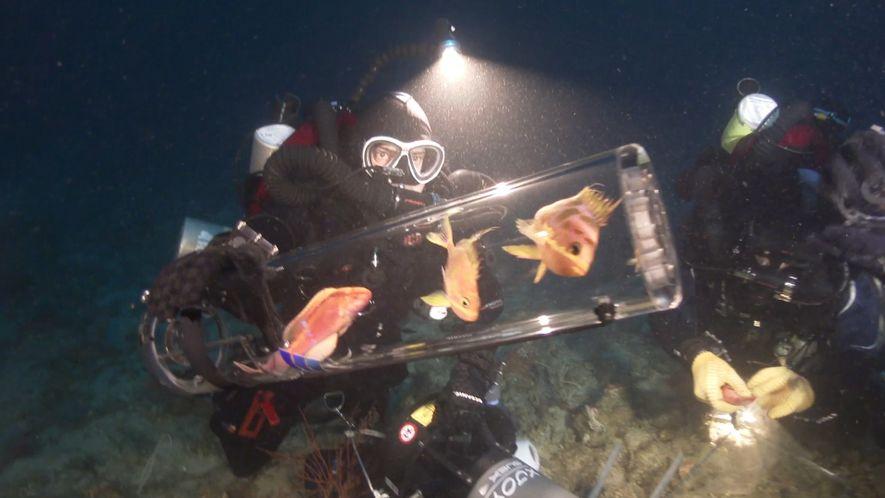 Neue Erfindung bringt Tiefseefische an die Oberfläche