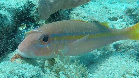 Wie werden schmutzige Fische wieder sauber?
