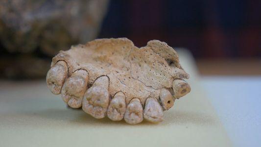 Ältestes Menschenfossil außerhalb Afrikas datiert