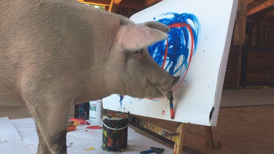 Können Tiere kreativ sein? Pigcasso, das malende Schwein, liefert saustarke Argumente dafür