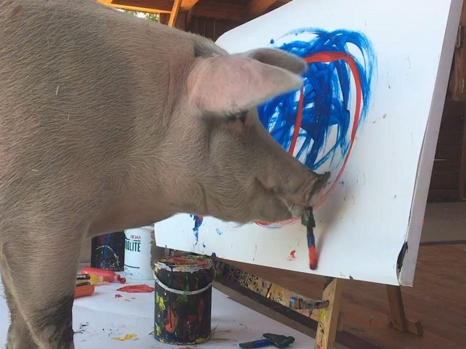 Tierische Kreativität: Pigcasso, das malende Schwein