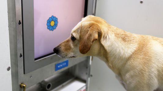 Gehirntraining könnte geistige Fähigkeiten alter Hunde verbessern