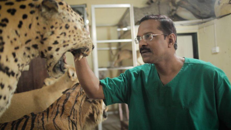 Indiens letzter Taxidermist