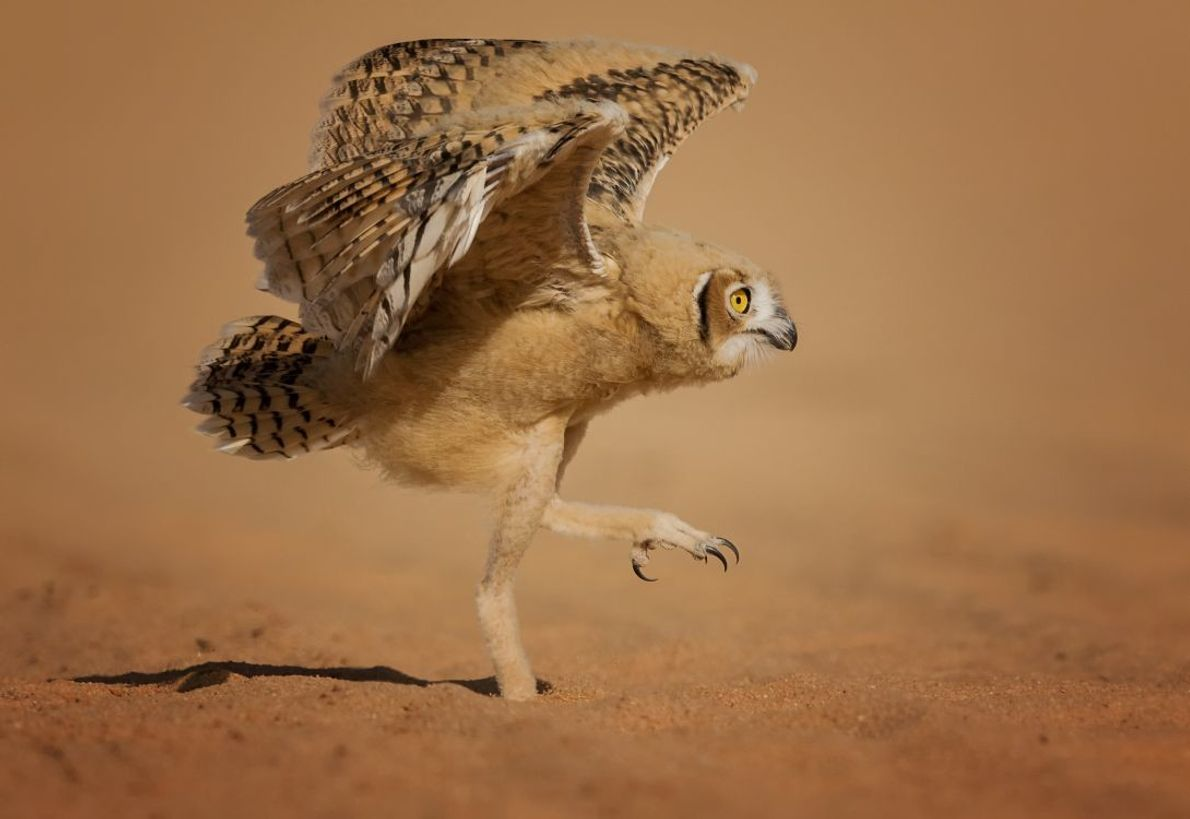"""How Can I Fly?"" 