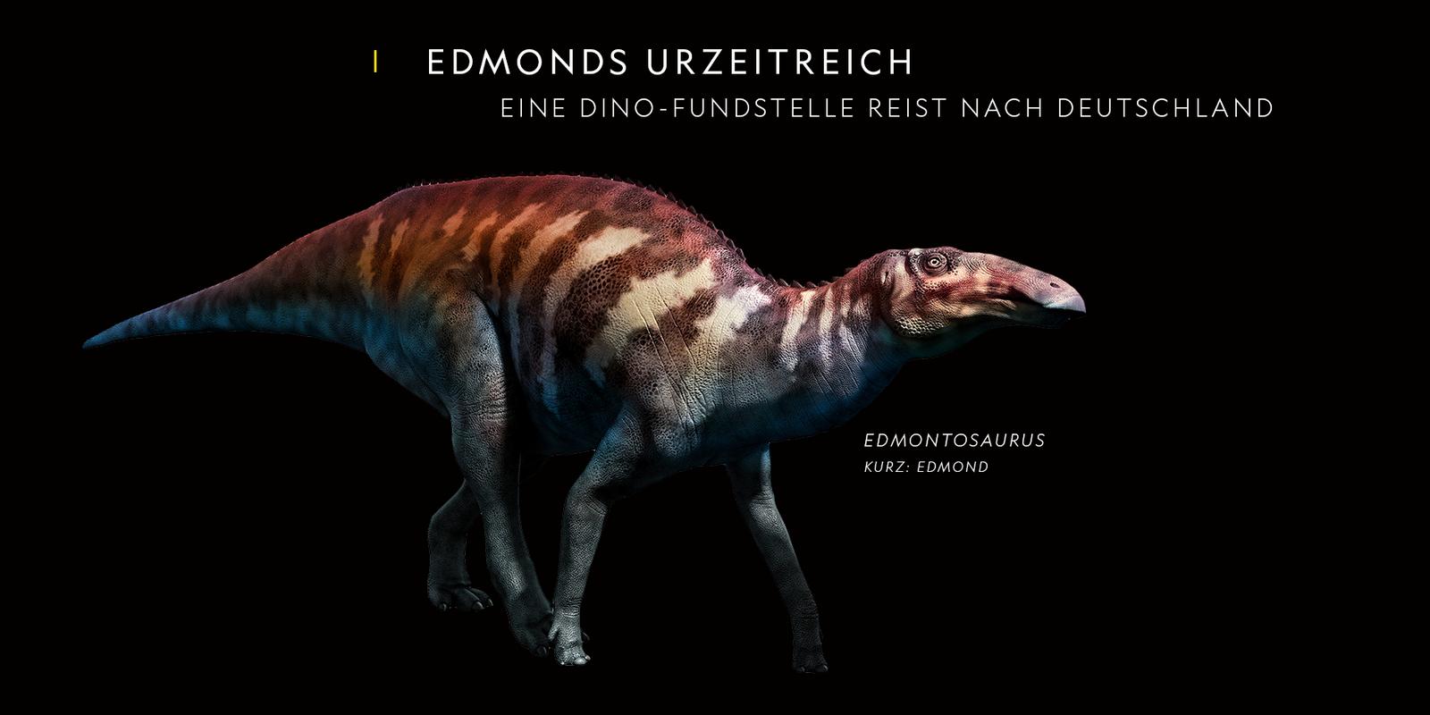 Kreidezeit zum Anfassen: Eine Fossilfundstelle reist nach Deutschland