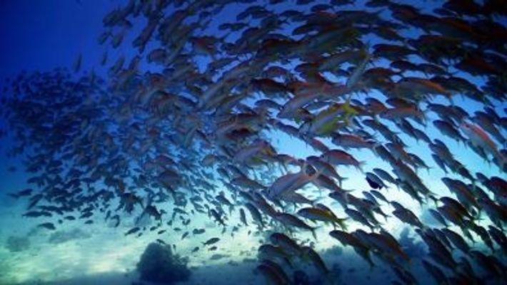 Nat Geo WILD feiert den Tag des Meeres