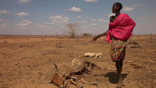 Wassermangel wird immer bedrohlicher