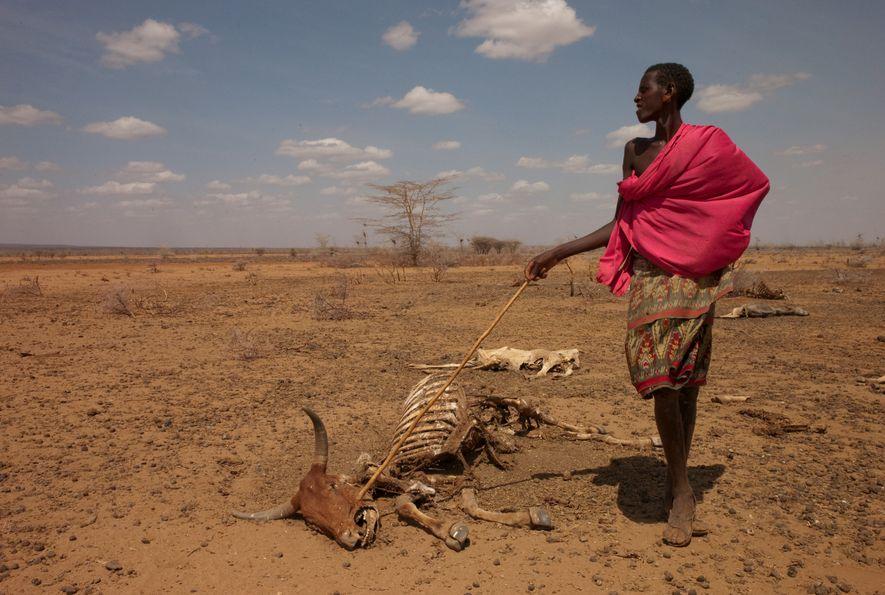 Wassernot in Kenia: Ein Samburu-Hirte mit einem Tierkadaver.