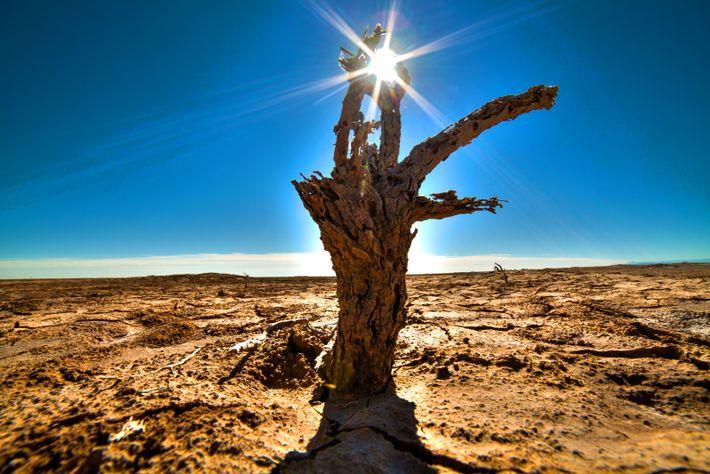 Dürren, Wirbelstürme, Überschwemmungen: Wie steht es um die Zukunft des Weltklimas?